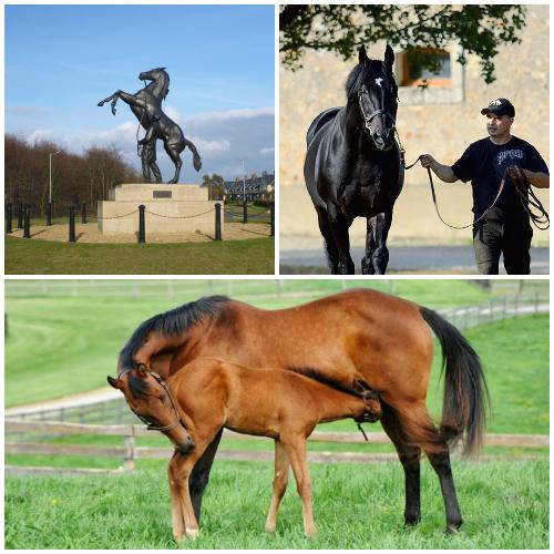 A collage of horse photos