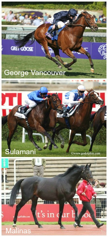 Three thoroughbred horses George Vancouver, Sulamani and Malinas